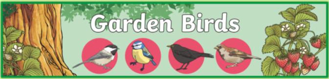 garden birds banner